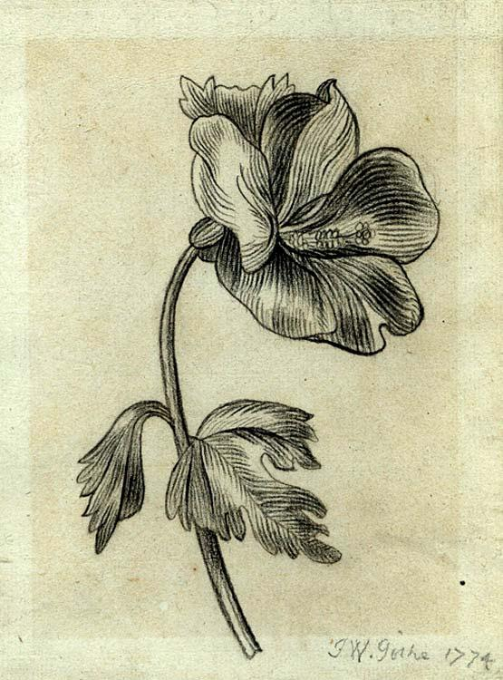 A sketch by J.W. Goethe, 1774 Source:  King's College, London