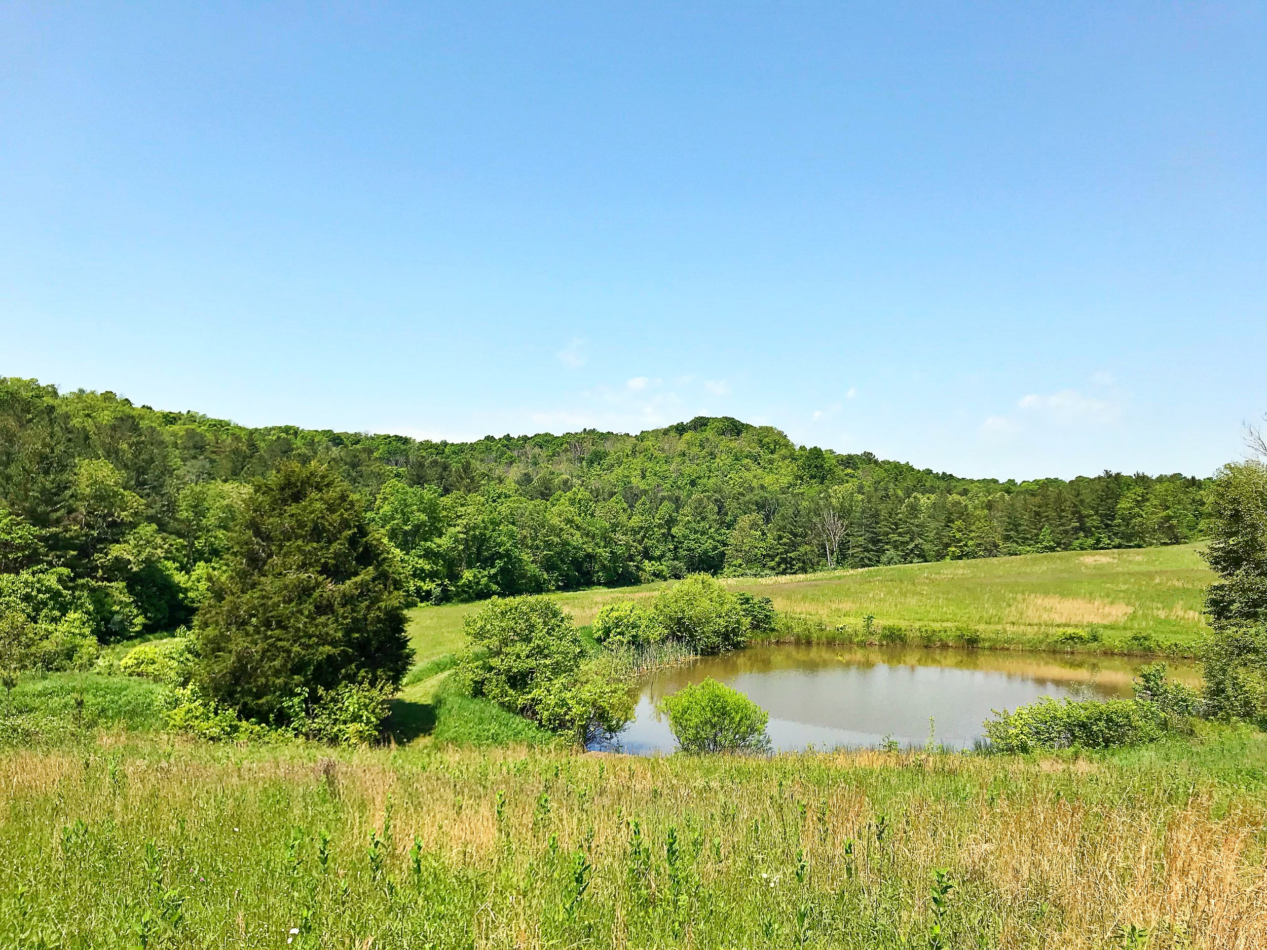 The prairie at SuBAMUH. The large Eastern Red Cedar from which we harvested is standing full and tall to the left of the pond. Photo: Erika Galentin