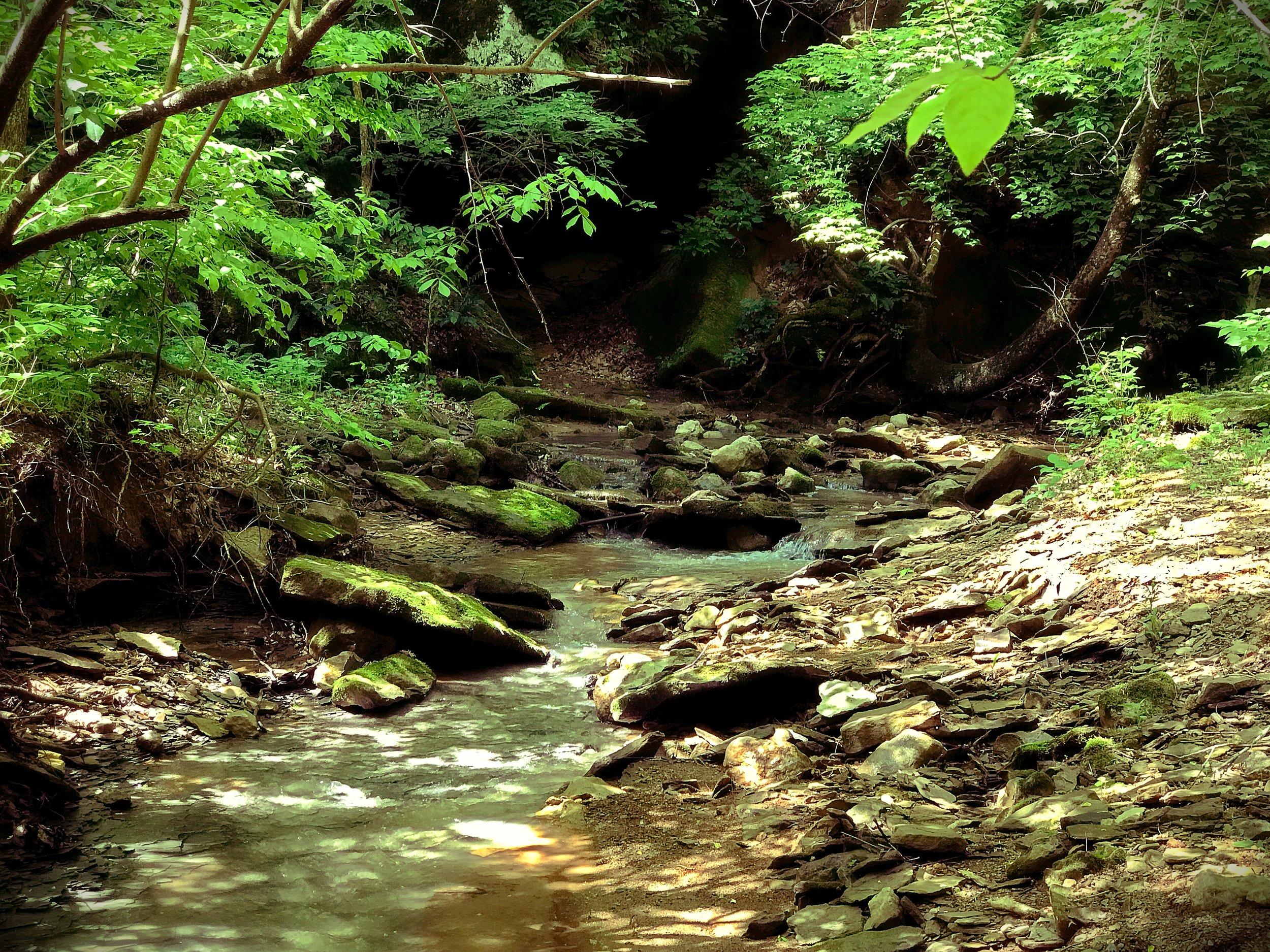 Crone's Creek, SuBAMUH, Athens County, OH. Photo: Erika Galentin