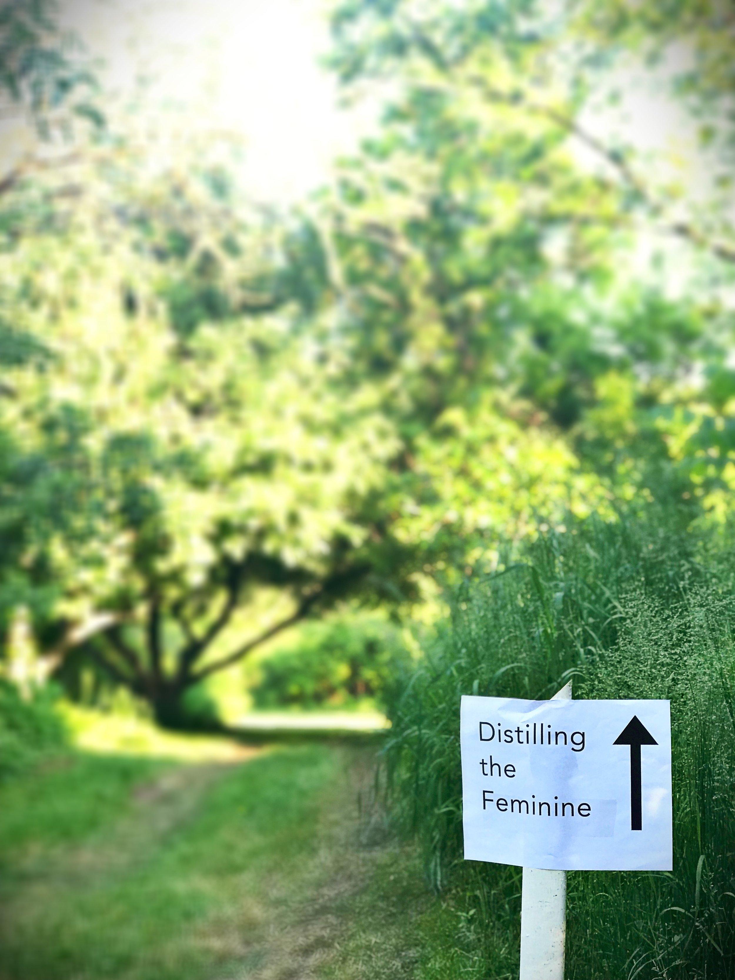Path through the old apple grove. SuBAMUH, Athens County, OH. Photo: Erika Galentin