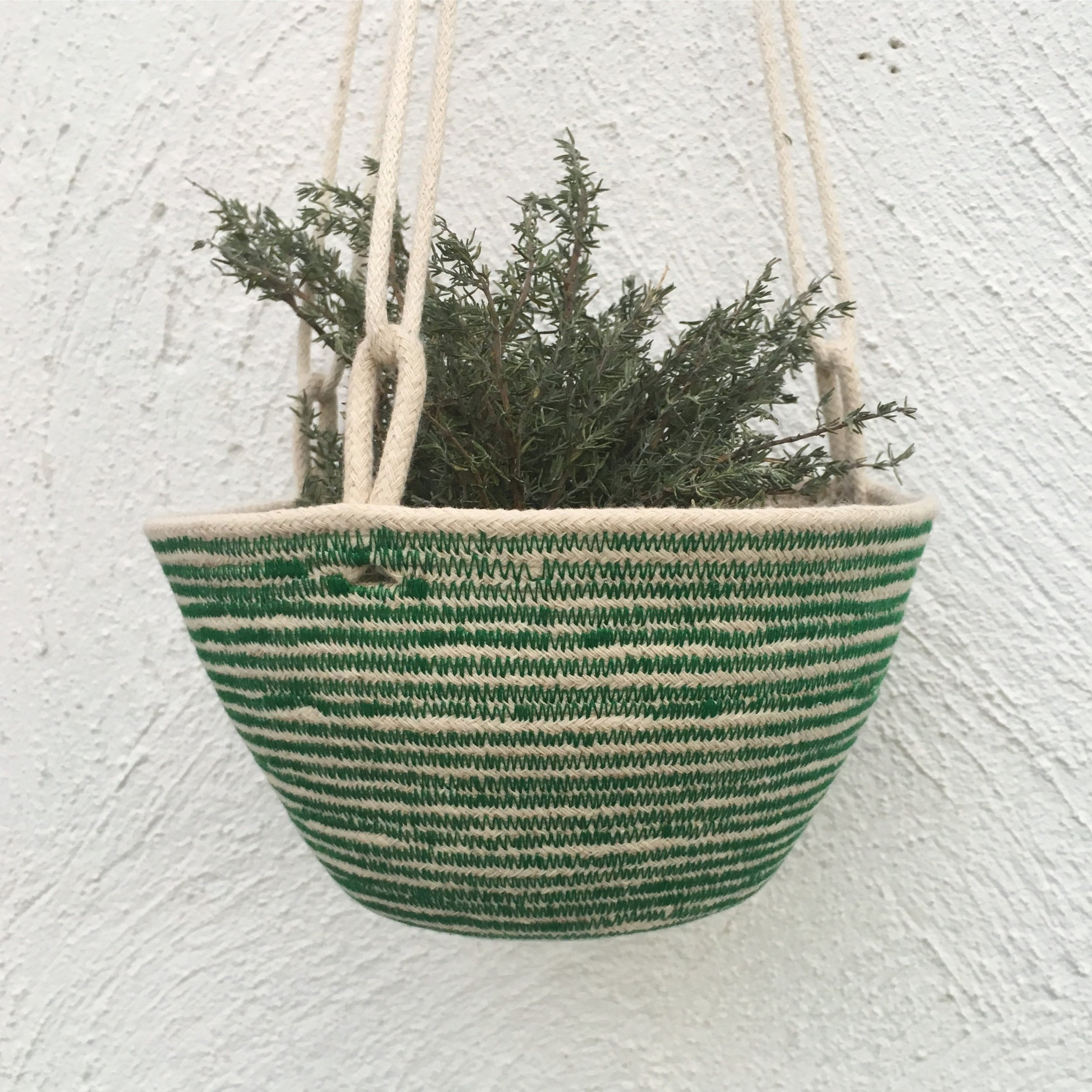 An early hanging basket 2016