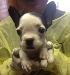 Sooey when she first arrived at PACC - only 3 pounds!