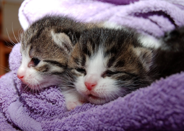 Kittens Need Your Love