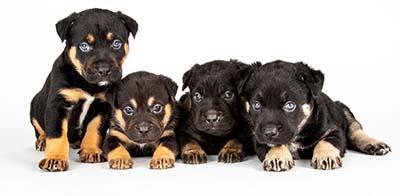 puppyfooter.jpg