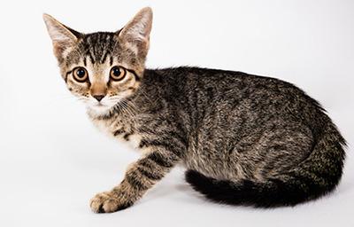 catmiddlephoto.jpg