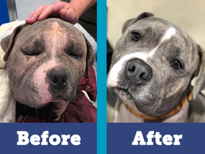 Bubbles made an amazing recovery thanks to your donations, PACC's medical team, and his loving foster family.