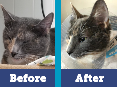 Thanks to you, Patches got the specialty surgery she needed to see again!