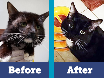 Wally went from miserable to the happiest cat you'd ever meet thanks to your support of multiple surgeries and ongoing foster care.
