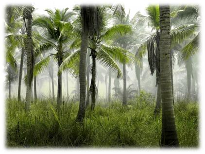belize forest.png