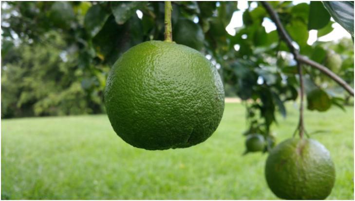 fruit farming.png