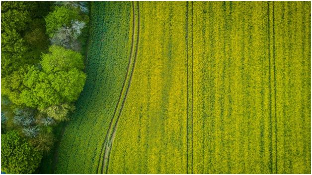 soursop plantations.png