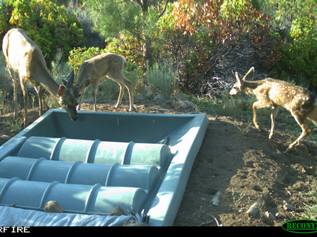 SP-Portolla2-Deer.jpg