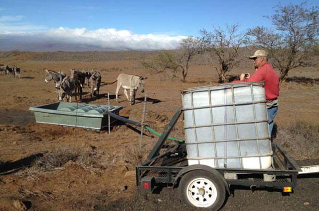Wildlife Guzzler and Wild Hawaii Donkey