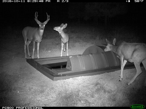 Deer Visiting Wildlife Guzzler at Night in NM