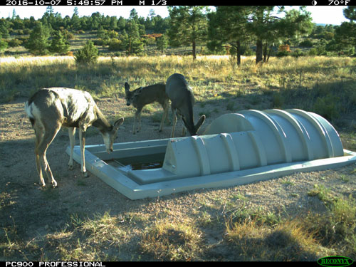 Wildlife Water Guzzler and Deer Los Alamos NM