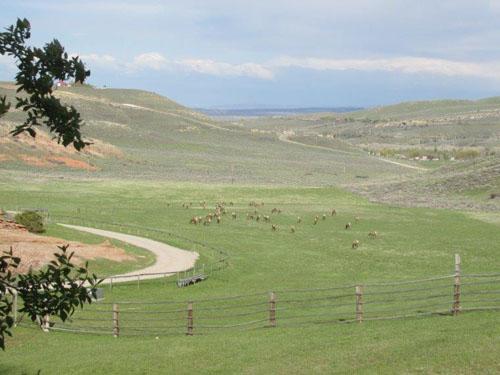 Orr-Antelope-500.jpg
