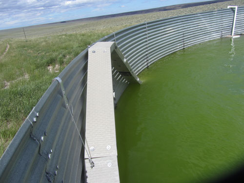 Wildlife Escape Ramp in Full Water Tank Idaho