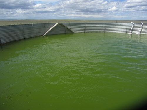 Idaho Wildlife Escape Ramps in Water Tanks