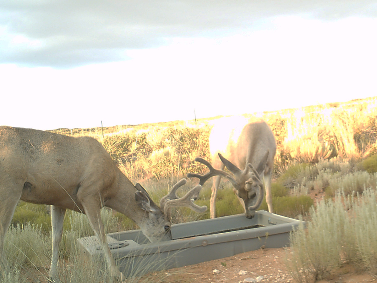Wildlife Water Drinker-110 in New Mexico