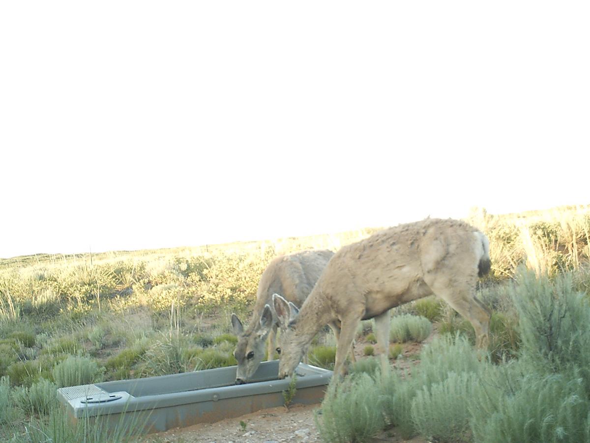 Two Deer in New Mexico Drinker from Wildlife Water Drinker.