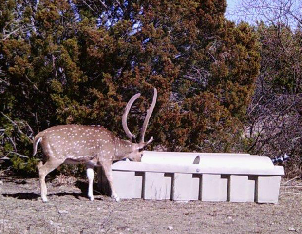 Axis Deer and Low-Pro Wildlife Water Guzzler