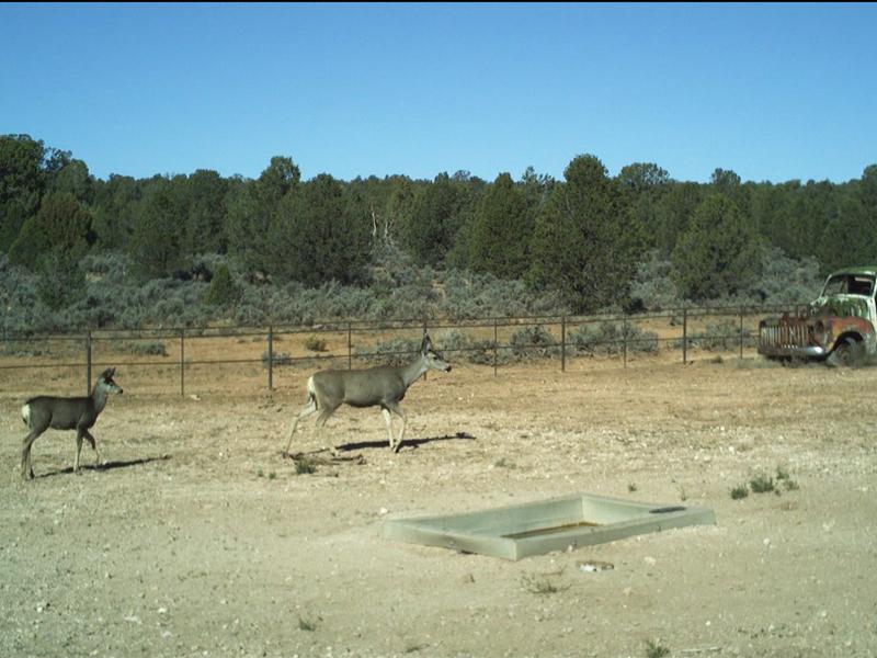 Deer Drink from Rainmaker Wildlife Drinker in Arizona