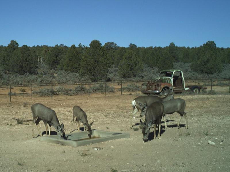 Wildlife Drinker-310 In Arizona
