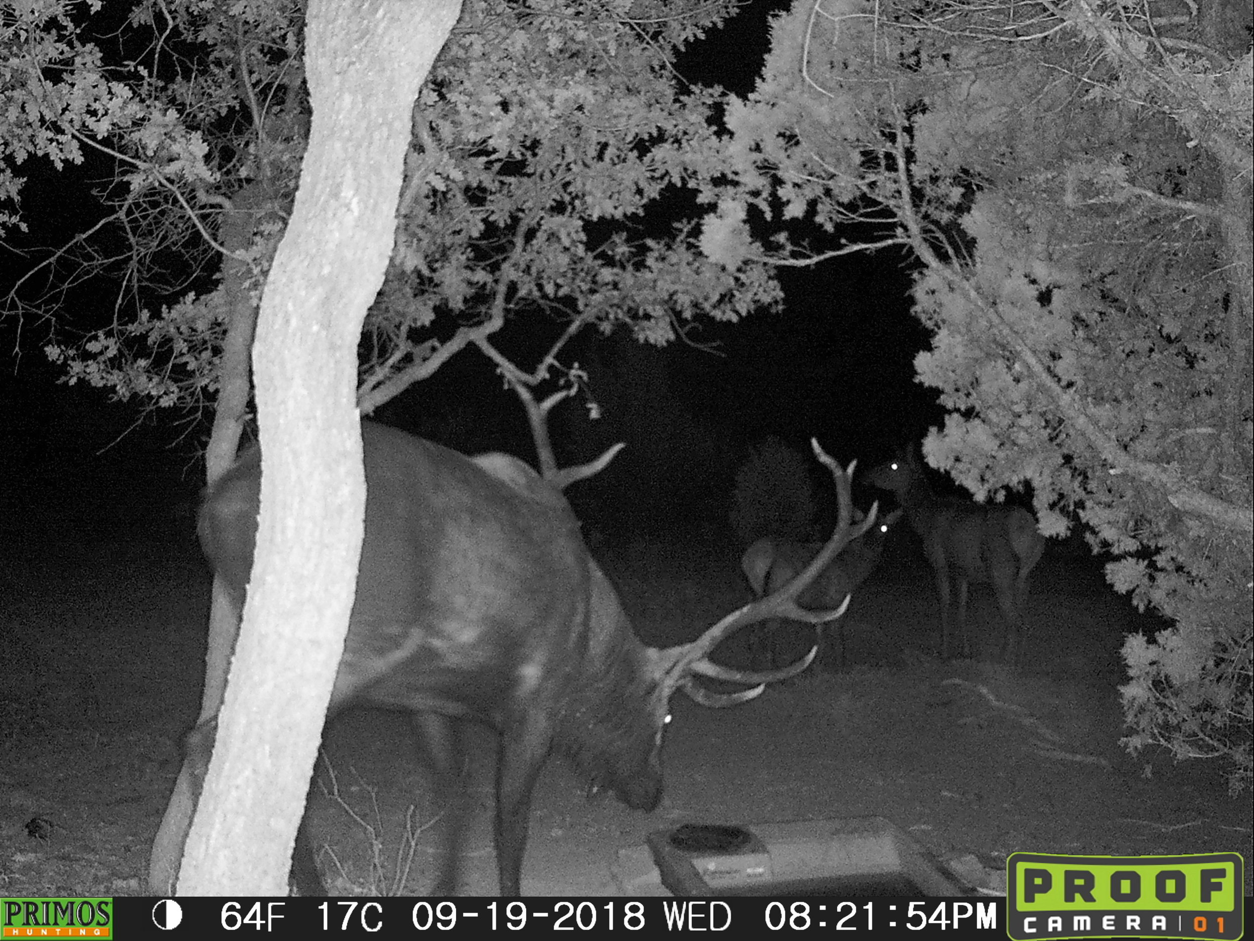 Bull Elk and Drinker-110