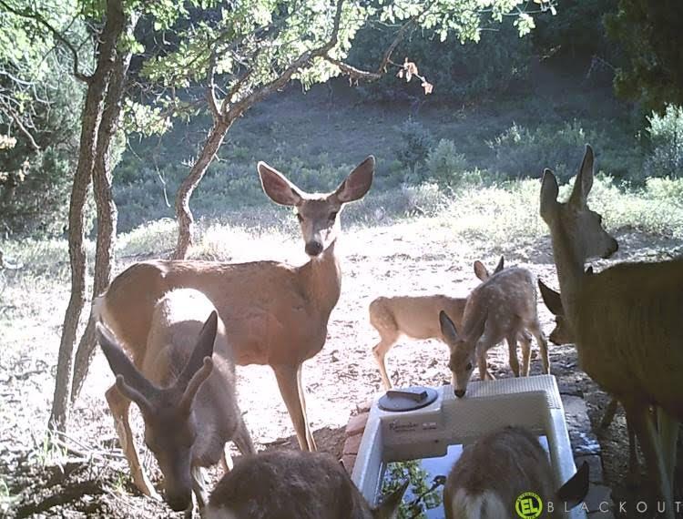 Wildlife Drinker-110 and Deer