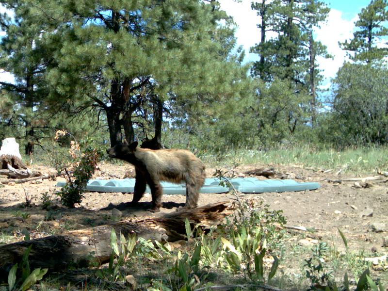 Bear-Cub.jpg