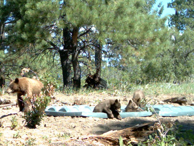 Cubs in Tub.jpg