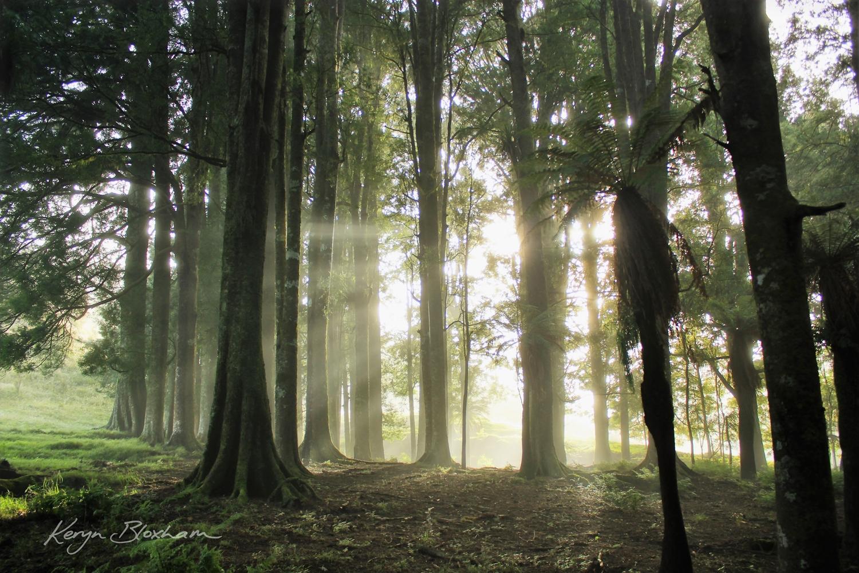 Misty Morning Taumarunui
