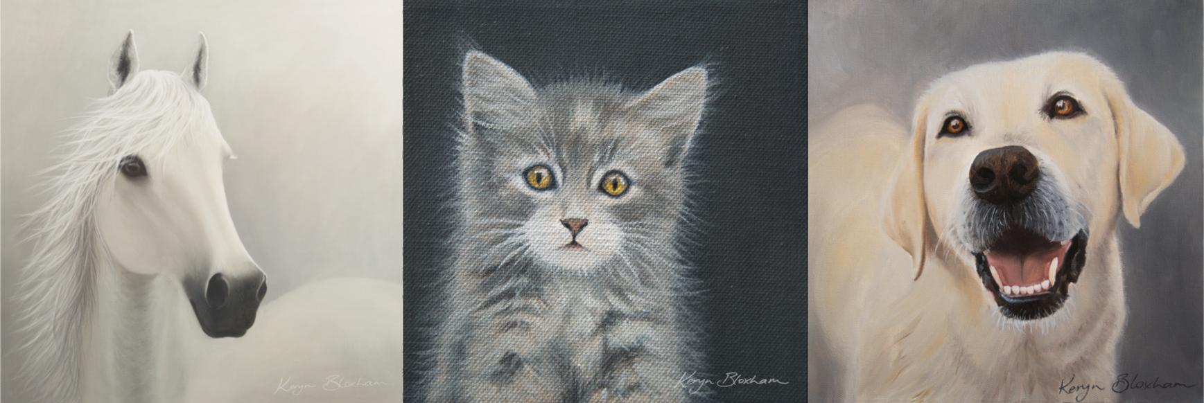 Beautiful Pet portraits by Keryn Bloxham New Zealand