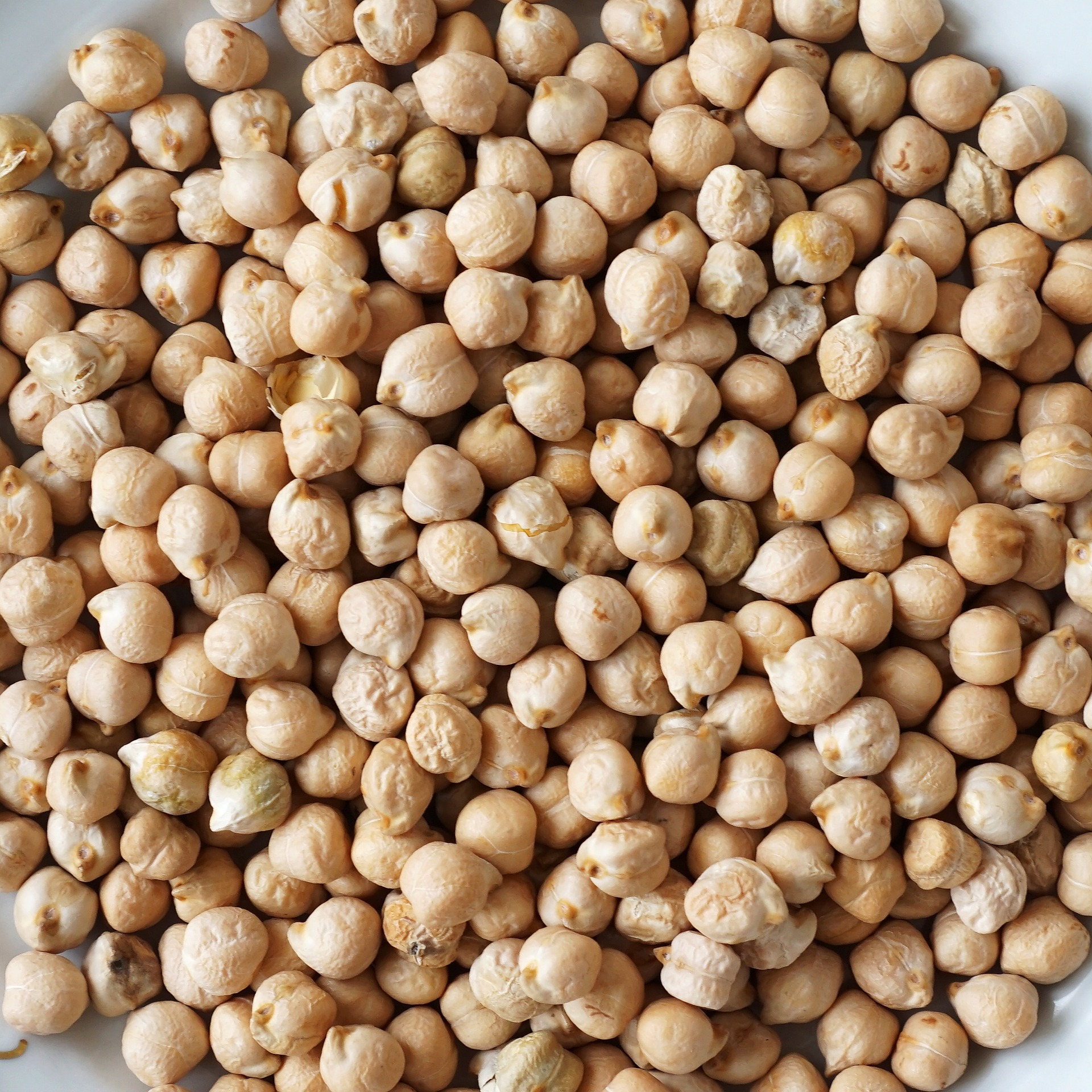 Chickpeas, Lentils, Mung Beans, Kabuli, Dun Peas, Pigeon Peas and Cow Peas, Faba Beans