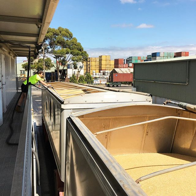Seeing how it's done // Truck spear sampling and grain testing