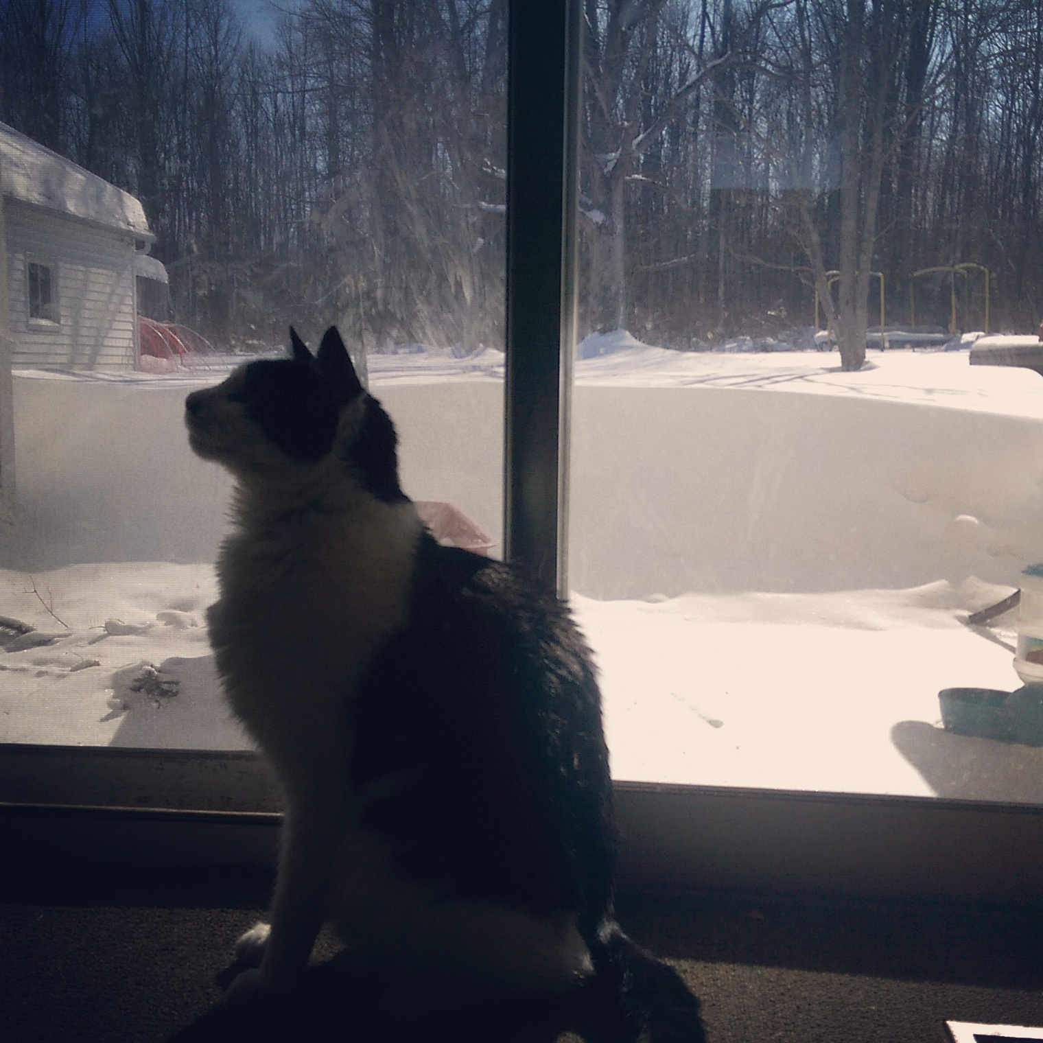 You can meow at the door all you want. When I open it, the wall of snow will still be there.