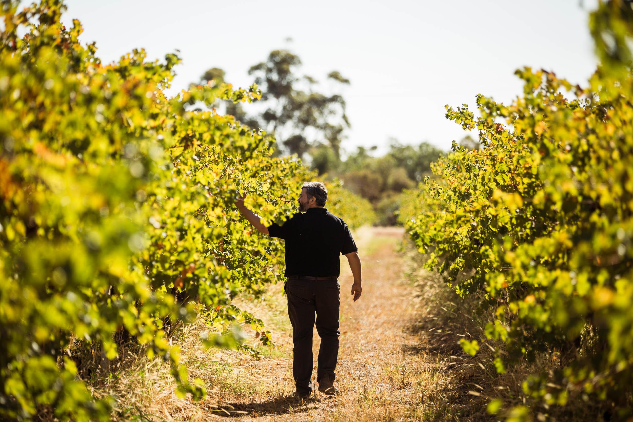 Toorak Wines_IMG_1724_DIGITAL.jpg