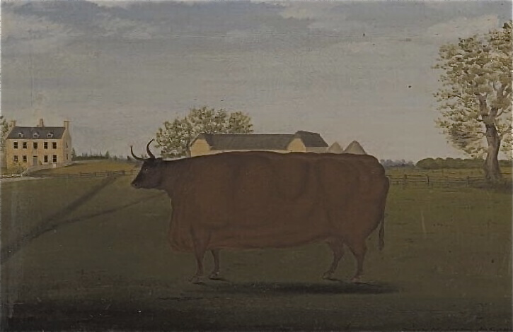 Painting of a Prize Cow in a Field, John Bradley 1827