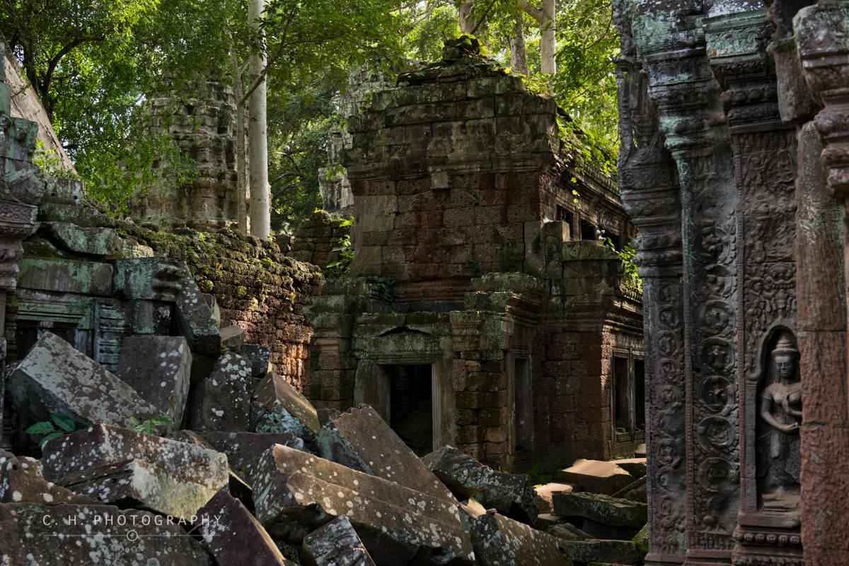 Ta Prohm Temple - Angkor Wat, Cambodia