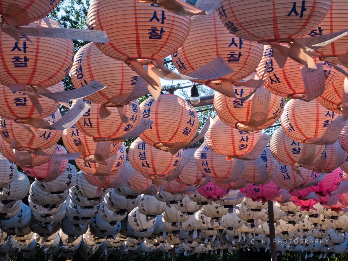 Pink Lanterns - Seoul, South Korea