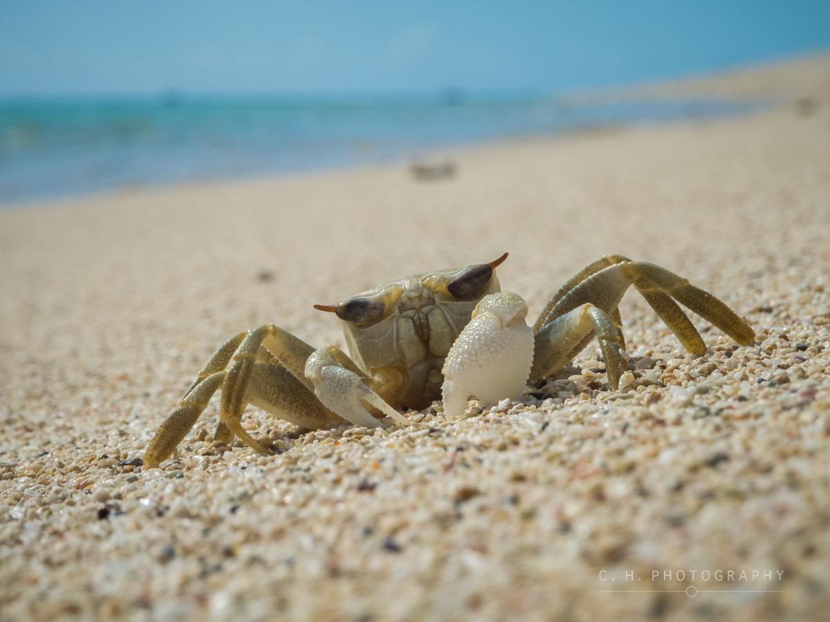 Beach Buddy - Mauritius