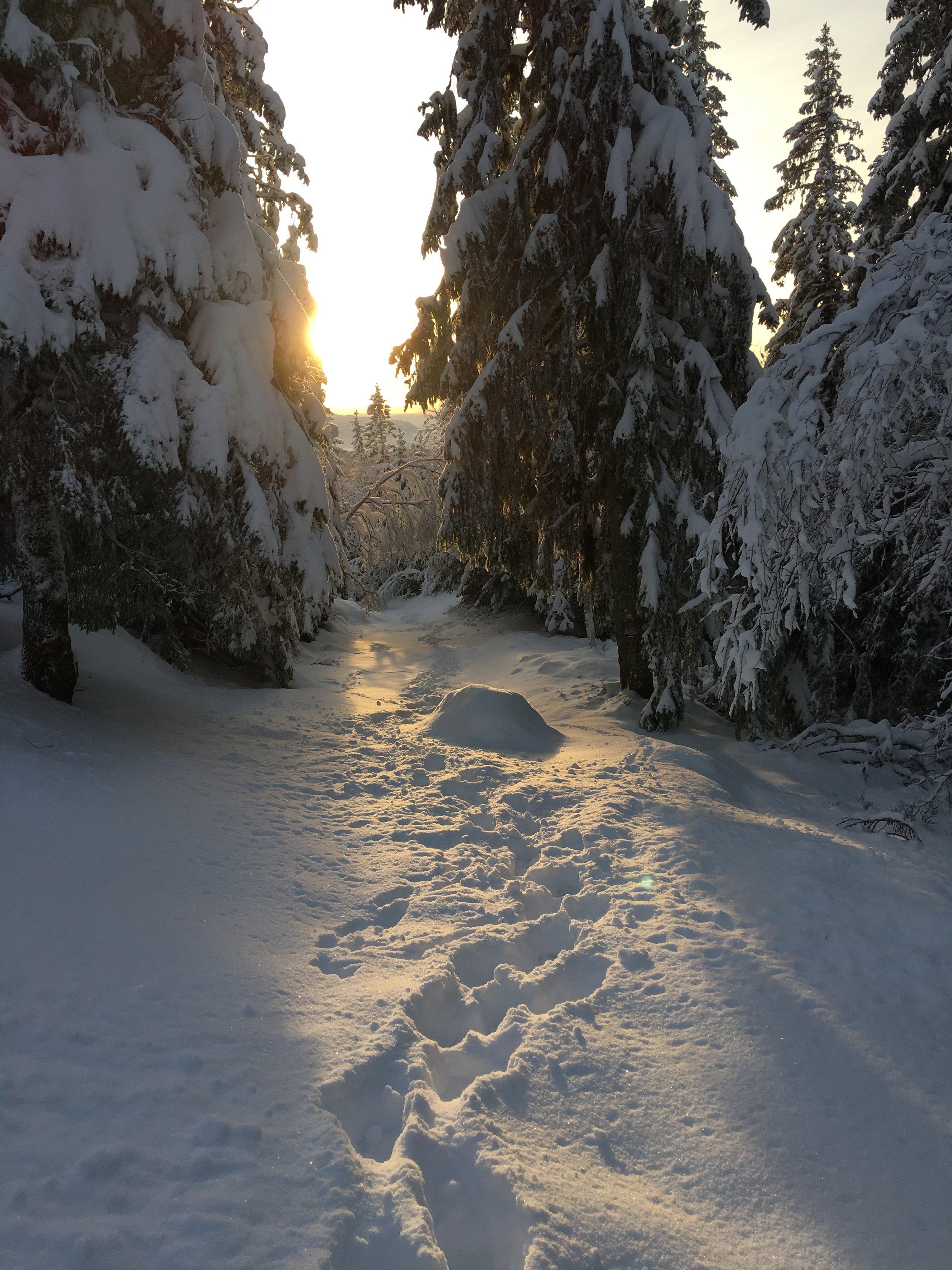 Min børn er lige nu på vej på skiferie i Norge. Billedet er fra engang i Norge - en helt anden tid, den dag havde jeg ikke ski på, men vandrede rundt i den dybe sne og prøvede at fange det bedste billede af solen mellem træerne.