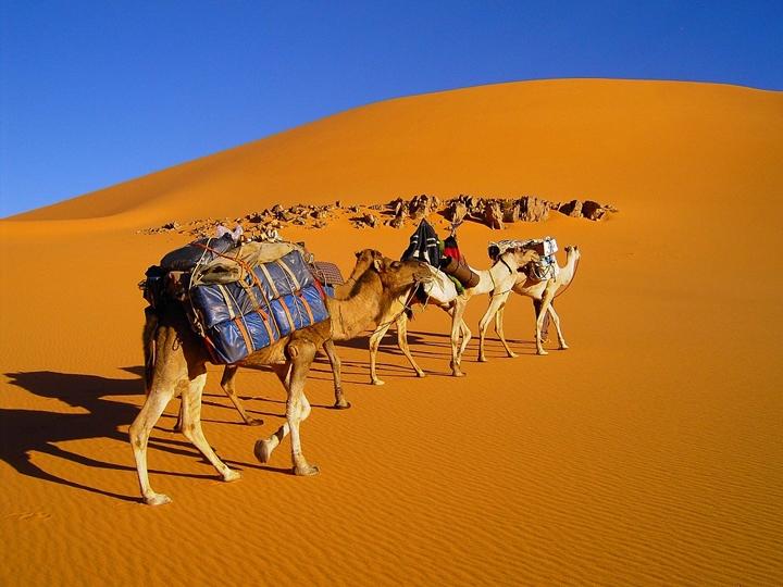 Libye-Caravane-chameaux-dromadaire-Sud-Libye-Sahara-Koufra-Maghreb-Afrique-de-Nord.jpg