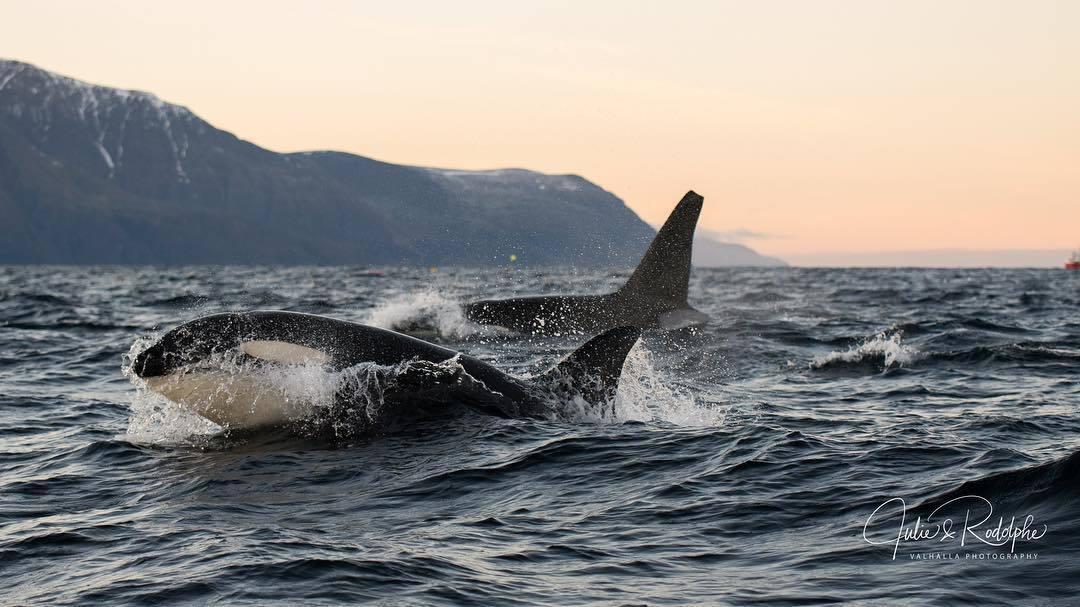 Empowering_Success_Reslience_Leadership_orcas2.jpg
