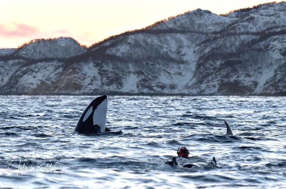 Empowering_Success_Reslience_Leadership_orcas4.jpg