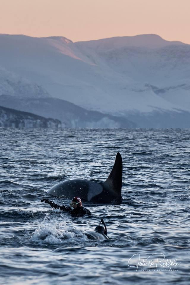 Empowering_Success_Reslience_Leadership_orcas5.jpg