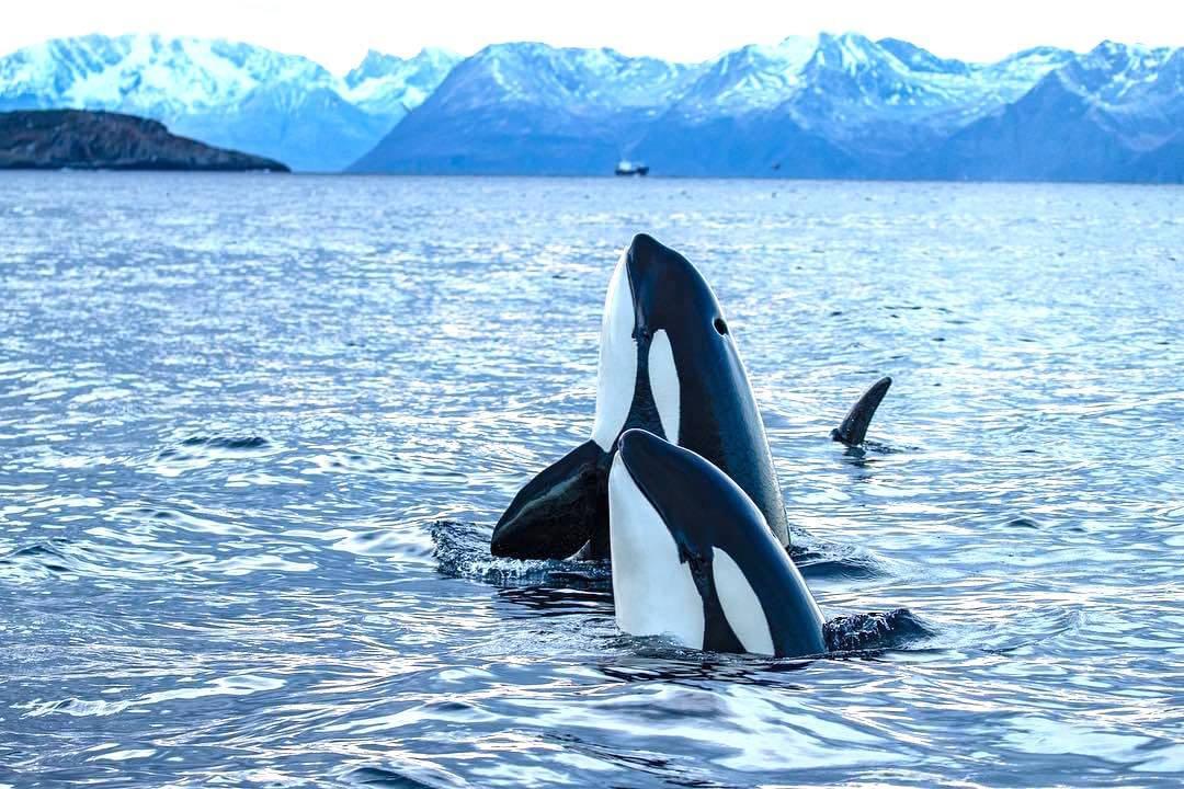 Empowering_Success_Reslience_Leadership_orcas6.jpg