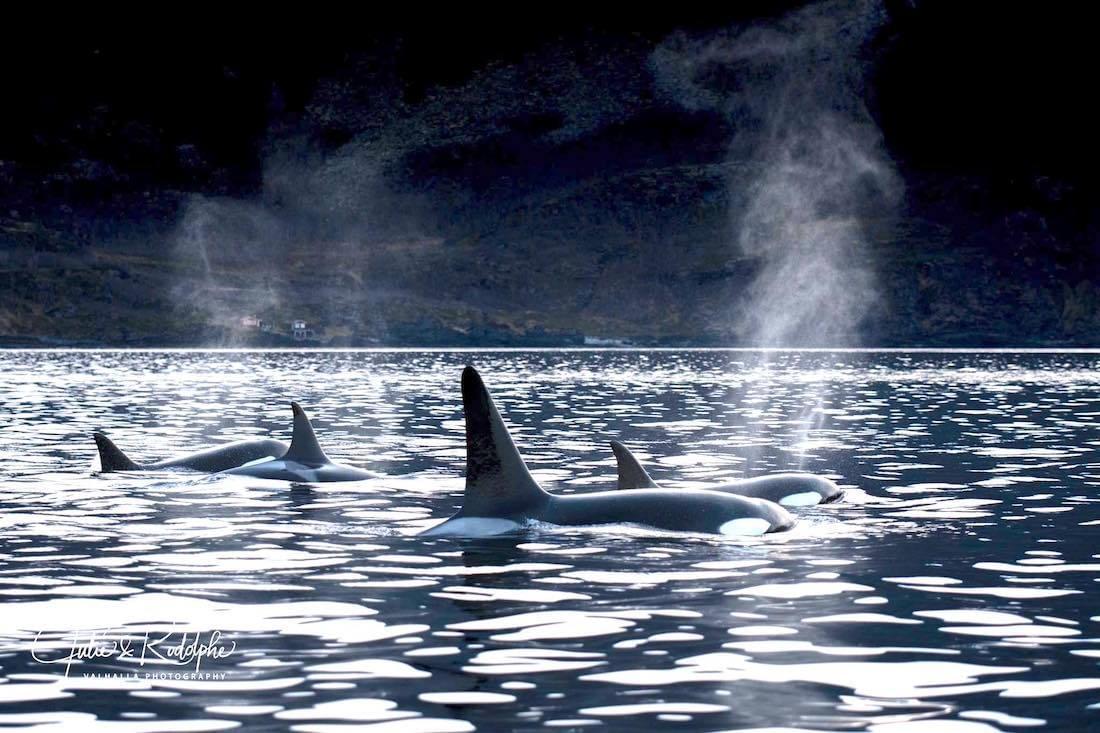 Empowering_Success_Reslience_Leadership_orcas10.jpg
