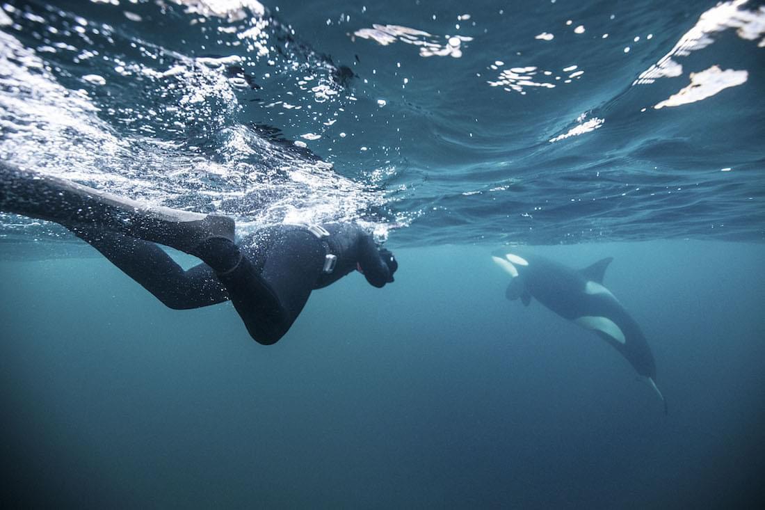 Empowering_Success_Reslience_Leadership_orcas11.jpg