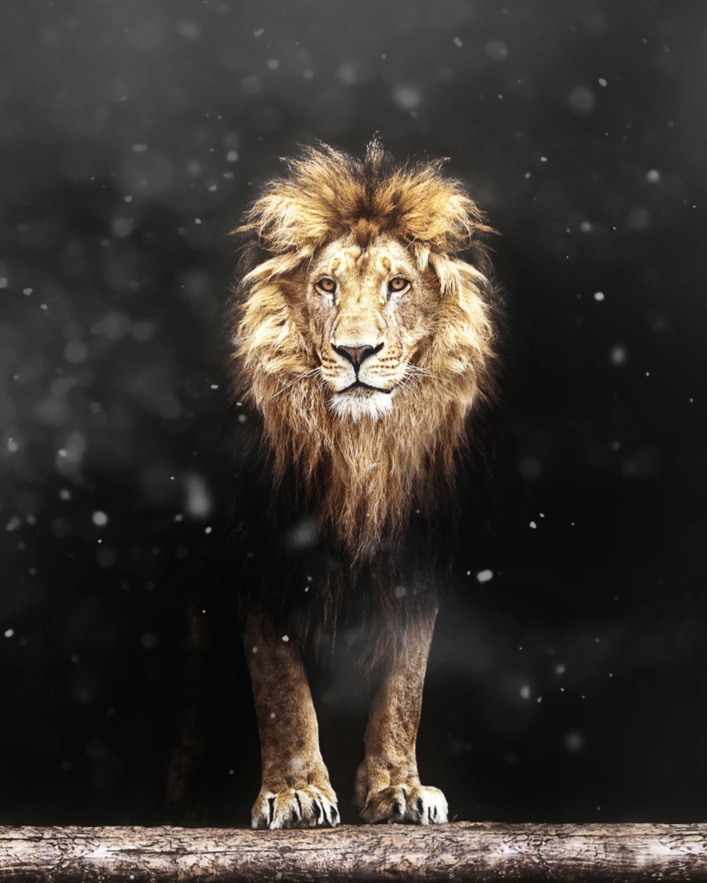 Empowering_Success_Change_Starts_With_You_Lion1.jpg